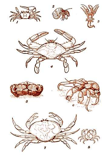 Different Types of Crabs  Copyright Stan Klos